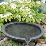 Ogrodownia doradza: woda w modnym ogrodzie